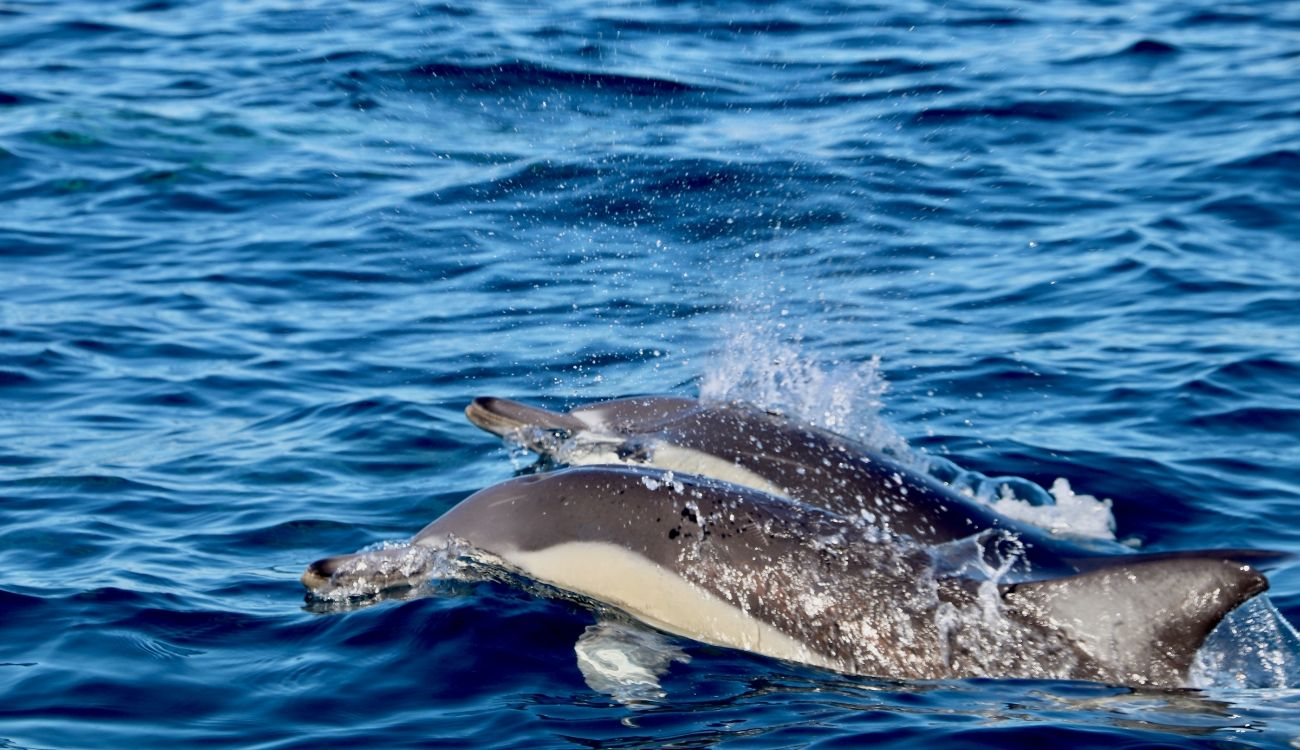 Dolphin Watching Newcastle