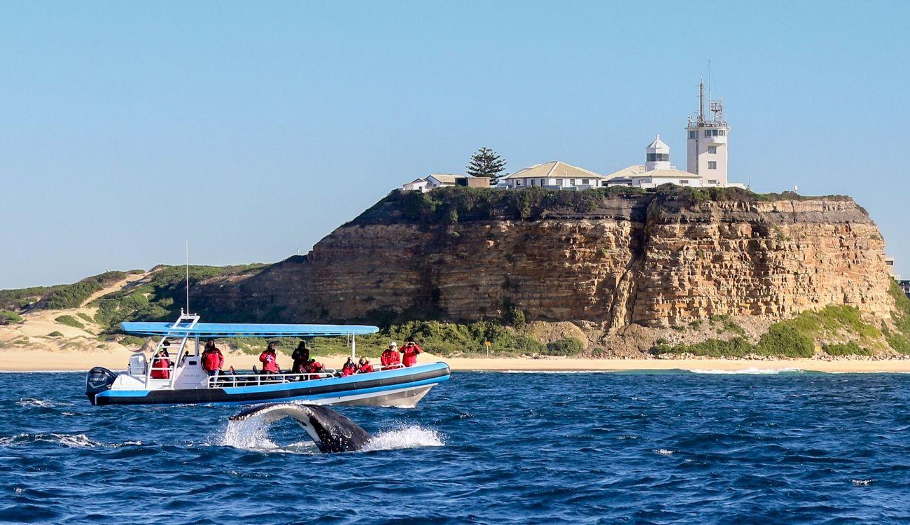 Whale Atmos Nobbys Beach