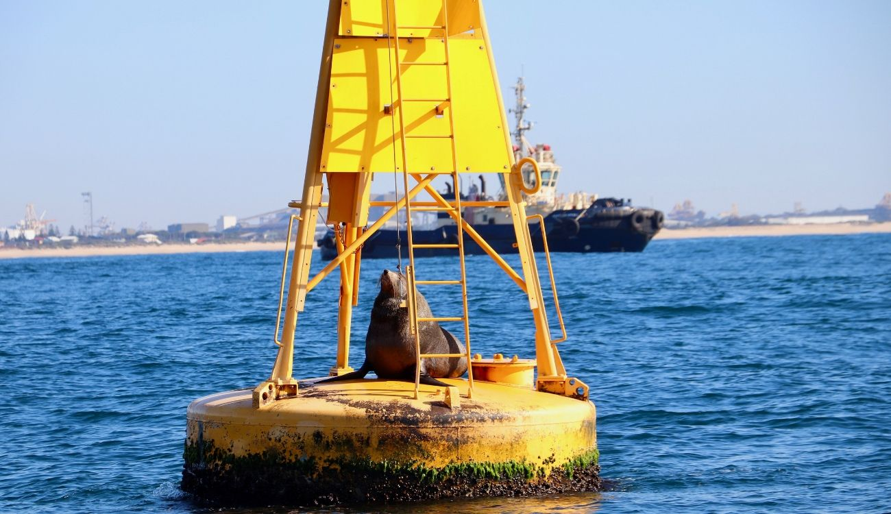 Seal and Tug