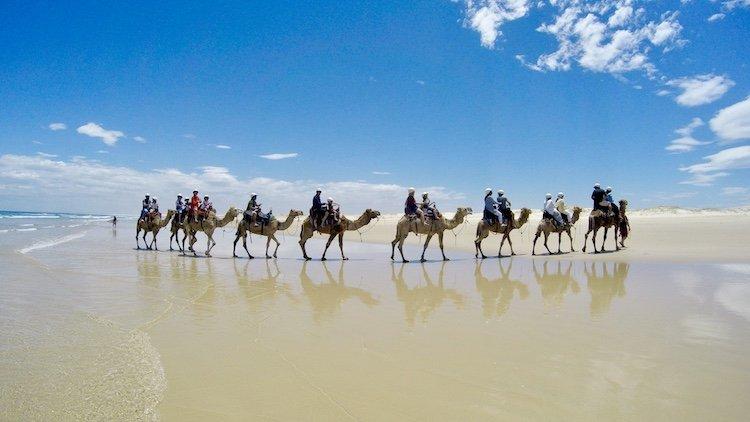 Camel Rides Stockton