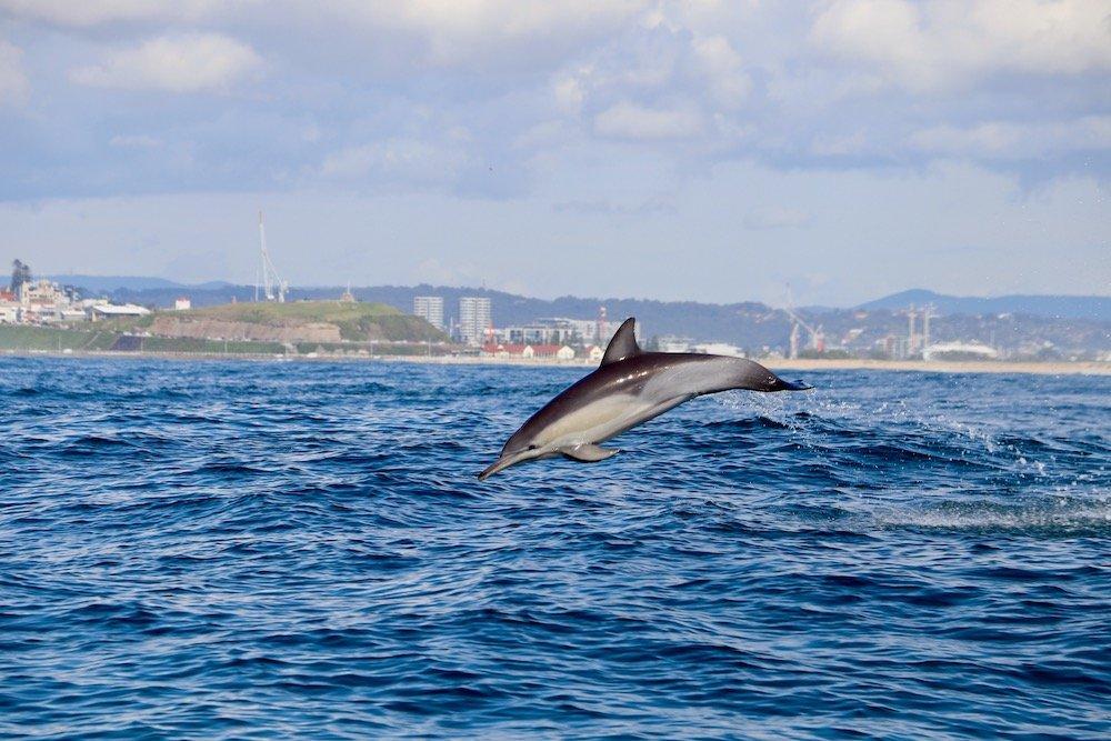 Common Dolphin Newcastle