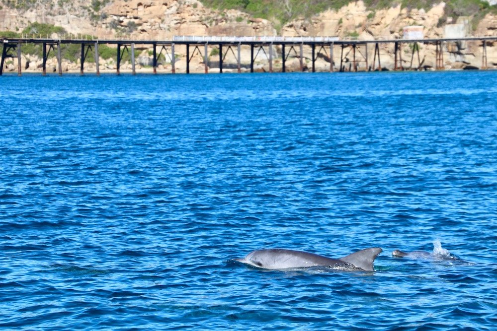 Dolphin watching lake macquarie