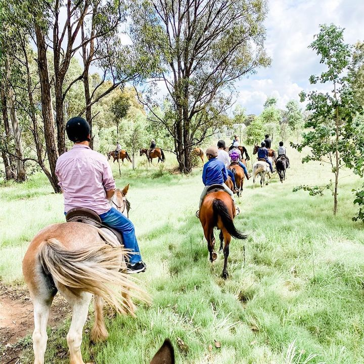 Hunter Valley Horses